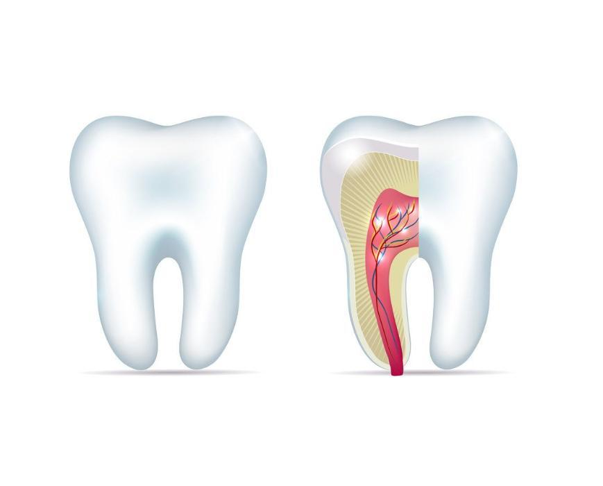 root canal diagram | lake charles la